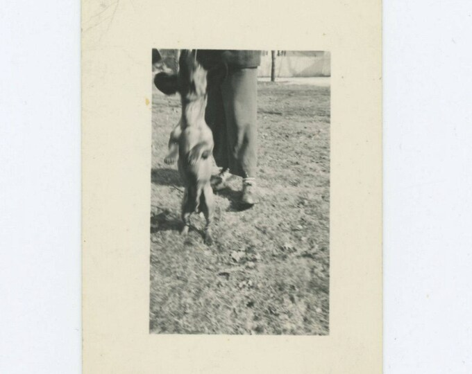 Vintage Snapshot Photo: Pet Trick (610506)