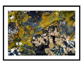 Large Abstract Wall Art Print, Fine Art Photography of Lichen, Living Room Decor, Nature Lover Gift