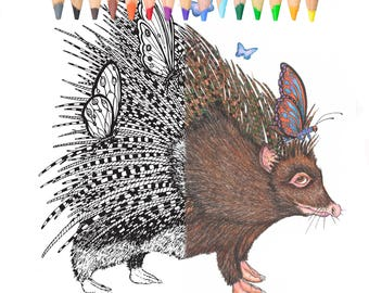 Porcupine, coloring pages, printable pages, coloring animals, coloring books, prismacolor , whimsical,butterflies, fantasy