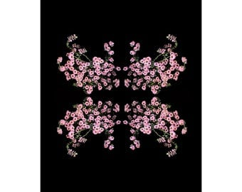 Limited Edition Fine Art Print-Flowers-Floral-Florography-Modern Art-Pink-Black-Flower-Abstract-Nature-Minimalist-Minimal-Interior Design
