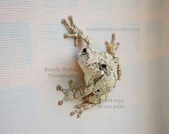 Frog decor, Tree frog picture, frog print, nature photography, animal photography, fine art print, wall decor, boys room decor,frog wall art