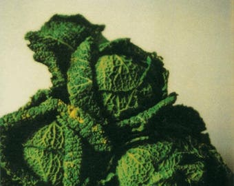 CY TWOMBLY - 'Cabbages' - original offset lithograph - c2009 - large (MUMOK, Vienna)