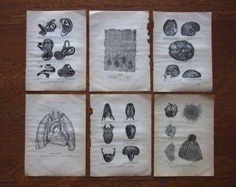 Original Antique Medical Book Pages, Black and White Illustrations, Artwork,Paper Ephemera,Morbid Vintage Art,Human Body,Original Book Pages