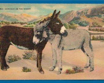 Vintage Linen Postcard - Burros Sharing a Hug or Romance on the Desert (2683)