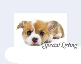 special listing -- ROXY & RAVEN