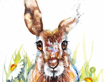 Original Watercolour Hare and Daisies Print by Artist Be Coventry Wildlife Animal Art