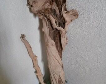 Driftwood, beautiful branch decor, nature
