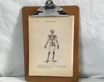 The human skeleton vintage medical illustration from 1915 antique illustration