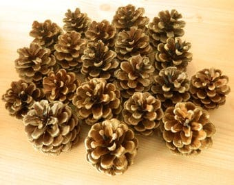 20 Pine cones for table decoration, weddings ect