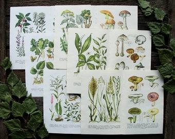 Gifts of the Forest - Set of 12 Vintage Botanical Book Pages. Wild Medicinal Plants Mushroom Illustration Print Scrap Collage Paper Ephemera