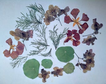 HerbariumJewelry Accessories Scrapbooking Pressed Dried flowers Set for carpets Dry Jewelry Flowers for making Jewelry designe