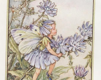 Flower Fairies: The CHICORY FAIRY Vintage Print c1930 by Cicely Mary Barker