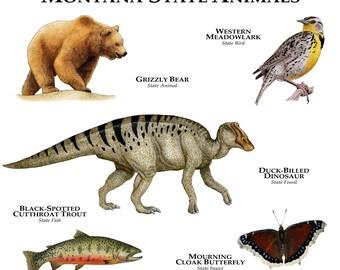 Montana State Animals Poster Print