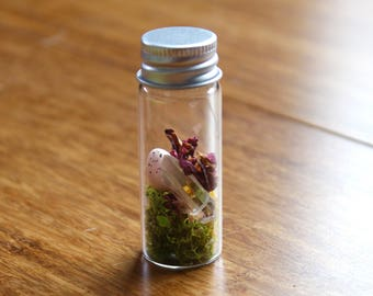 DIY  Egg Fairy Terrarium