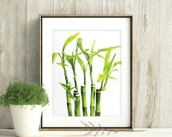 Lucky Bamboo print,Dracaena sanderiana print, Ribbon Dracaena,Belgian Evergreen, Ribbon Plant, botanical print, Botanical Art, plants art