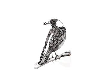 Australian magpie pattern art drawing