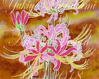 Spider lily Illustration