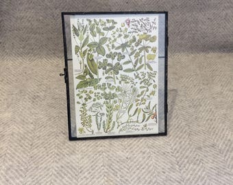 Vintage framed botanical drawing, vintage botanical flower illustrations, botanical prints, floral, in glass frame, Green