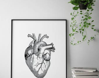 Anatomical Heart Print, Anatomical Heart Wall Art, Heart Illustration Print, Heart Drawing, Heart Anatomy Printable, Vintage Illustration