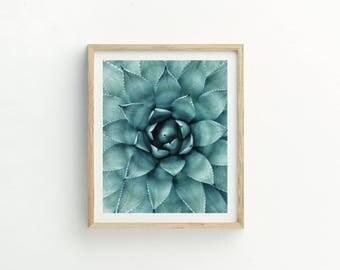 Silver Succulent Print |  Succulent Printable Art |  Instant Download |  Succulent Photography | Succulent Art | Cactus Print | Cacti Art