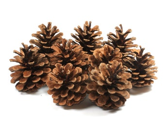 9 Pine Cone, Brown Woodland, Crafts Pine Cone, Crafts Natural Pine Cones, Christmas Pinecones, Natural Cone Pine, Woodland Forest, Tree, DIY