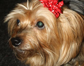 Dog or Puppy Hair Bow, red Korker bow is attatched to an alligator clip.  Red and White Polka Dot Ribbon.