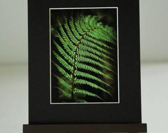 New Zealand Fern Print. Kiwi Photographer.