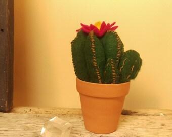 Felt Hedgehog Cactus