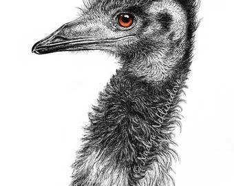 Australian Emu - Bird Fine Art Print 8x10 inches (20x25cm) - Giclee Reproduction of Pen Ink Drawing, bird art, woodland nature decor