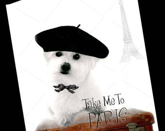 Dog Card-Maltese Frise Greeting Card-Paris