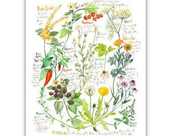 Healing herb print, Watercolor medicinal herbs, Healing plants poster, Botanical artwork, Home decor, Garden illustration, Healthy art gift