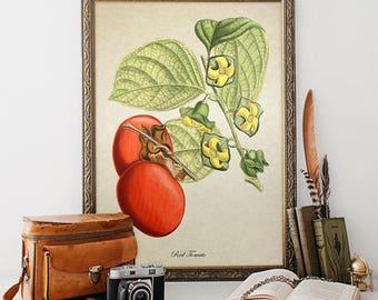 Vintage Botanical Wall Art Print Tomato Giclee Kitchen Decor Antique Natural History Vegetable Art Decorative Tomato Reproduction VF024