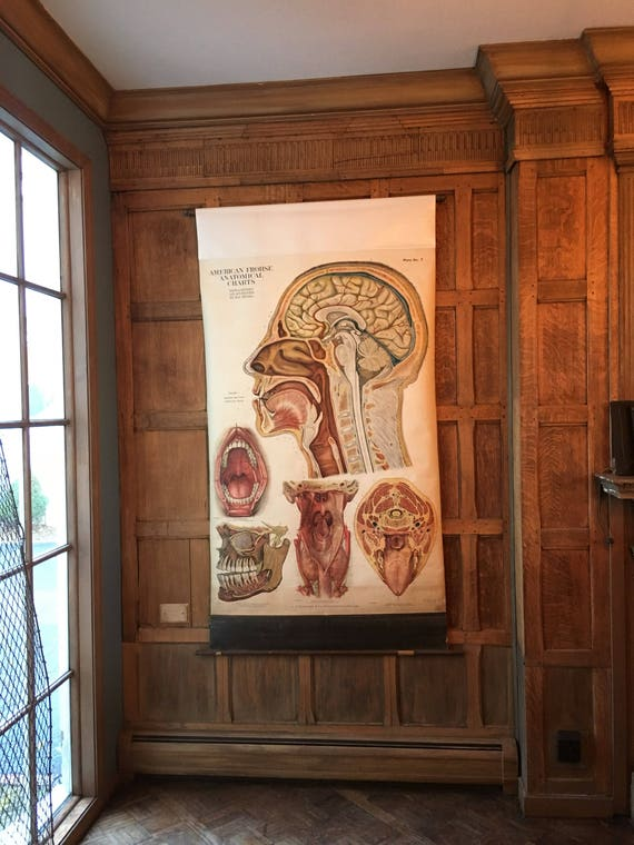 Vintage Pull Down Chart, Cranial Anatomy School Chart, Medical Art, Medical Student Gift, American Frohse Anatomical Charts