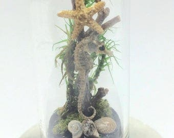 Tiny real SEAHORSE in miniature glass dome - with starfish and shells