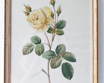 Rose Flower Floral Botanical French Country-Vintage Art Illustration-Antique French Botanical Engraving print-Pierre-Joseph Redouté
