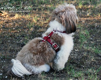 "Harness/Leash/Lead for dogs - ""Romeo"""