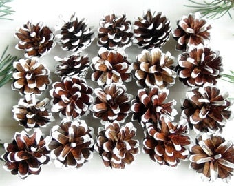 Natural Pine cones,DIY,painted white Pine Cones,snow pine cones,Christmas decor!Wedding Decor,white color pine cones,Rustic style,Set of 25