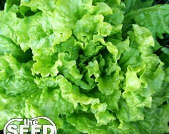 Black Seeded Simpson Lettuce Seeds -1,000 SEEDS NON-GMO