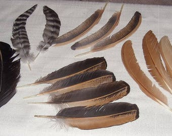 Assorted Chicken Feathers