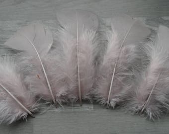 Set of 20 in blotter pink Turkey feathers