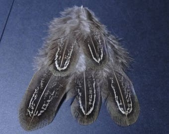 Set of 5 Colchis pheasant feathers