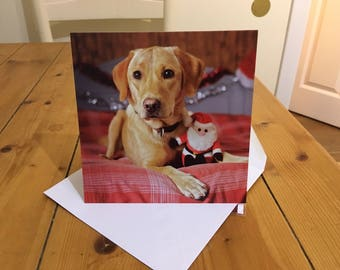 Labrador Dog Christmas Card