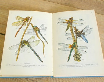 Vintage insects book field guide lake creek.Halloween decor.Vintage insects shells.Dragonfly dragonflies.Creepy crawlies.Collage pages