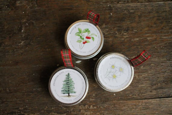 Holiday Ornament Seeds