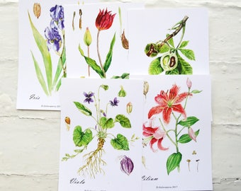 Watercolor cards set| Botanical cards| Botanical prints| Small botanical prints| Floral cards| Floral prints| Botanical set