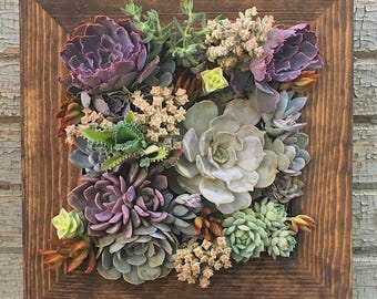 12x12 Living Wall Succulent Planter Vertical Hanging Garden Art Rustic Wood Arrangement Flower