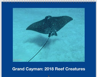 Grand Cayman: 2018 Reef Creatures