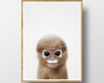 Baby Monkey Print, Monkey Wall Art, Monkey Print, Baby Animal Prints, Nursery Animals, Nursery Decor, Nursery Print, Nursery Printable