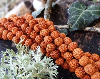 Nepal Rudraksha bead