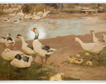 Ducks, educational chart , 1910